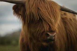 Tiago Sales, Scotland Cattle (United Kingdom, Europe)