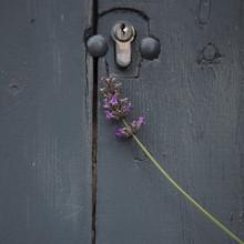 Nadja Jacke, Lavendelblüte und blaue Tür (Deutschland, Europa)