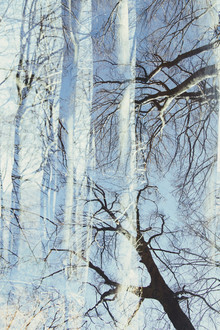 Nadja Jacke, Bald beech forest against cloudless sky (Germany, Europe)