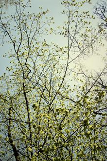 Nadja Jacke, Fresh tender foliage of beech in the sunlight. (Germany, Europe)