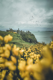 Philipp Steiger, Dunluce Castle (Ireland, Europe)