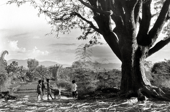 Children at the Big Tree - Central Highland - Vietnam - fotokunst von Silva Wischeropp