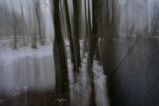 Sascha Hoffmann-Wacker, Wälder (Germany, Europe)