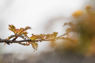 Sebastian Worm, Autumn branch (Norwegen, Europa)