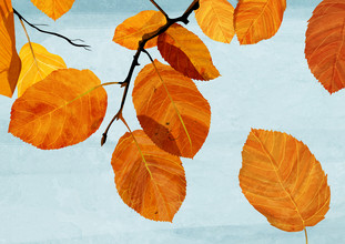 Katherine Blower, Autumn Leaves (United Kingdom, Europe)