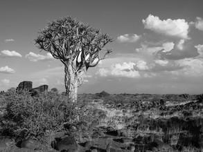 Lonley Quiver Tree - fotokunst von Phyllis Bauer