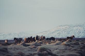 Pascal Deckarm, Islandpferde (Island, Europa)