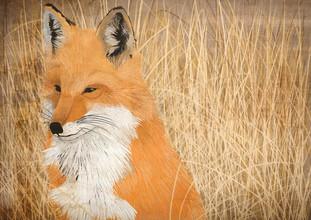 Katherine Blower, fox (United Kingdom, Europe)