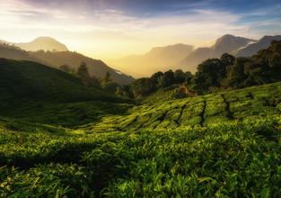 Martin Morgenweck, Indian Teavalley (Indien, Asien)
