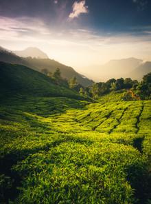 Martin Morgenweck, Indian Teavalley II (Indien, Asien)