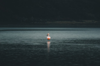 Ueli Frischknecht, Flamingo in Patagonien (Chile, Lateinamerika und die Karibik)