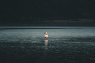 Ueli Frischknecht, Flamingo in Patagonia (Chile, Latin America and Caribbean)