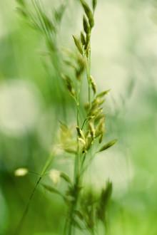 Doris Berlenbach-Schulz, Bewegtes Gras in grün - II (Deutschland, Europa)