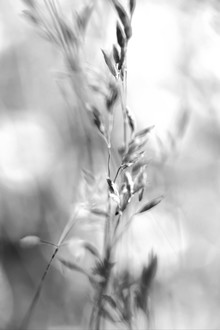 Doris Berlenbach-Schulz, Bewegtes Gras in schwarzweiss - II (Deutschland, Europa)