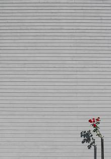 Marcus Cederberg, Il name della rosa (Sweden, Europe)
