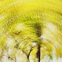 Nadja Jacke, Herbstbaum abstrakt (Deutschland, Europa)
