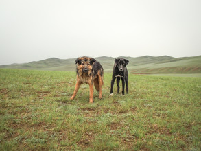 Franziska Söhner, Dogs, Mongolia (2016) (Mongolei, Asien)