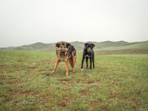 Franziska Söhner, Dogs, Mongolia (2016) (Mongolia, Asia)