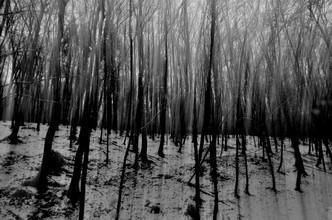 Michael Schaidler, strange wood (Deutschland, Europa)