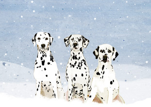 Katherine Blower, Dalmatians (United Kingdom, Europe)