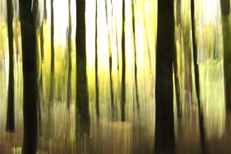 Steffi Louis, autumn abstract #o5 (Deutschland, Europa)