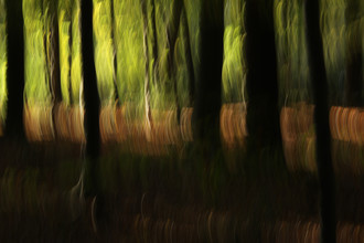 Steffi Louis, autumn abstract #o4 (Germany, Europe)