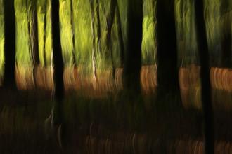 Steffi Louis, autumn abstract #o4 (Deutschland, Europa)