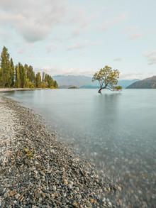 Manuel Gros, Wanaka Tree I // Neuseeland (New Zealand, Oceania)