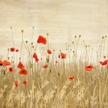 Katherine Blower, Poppyfield (United Kingdom, Europe)