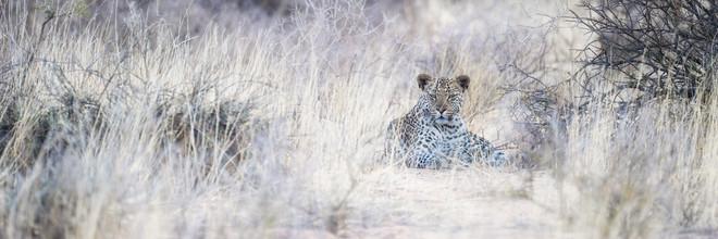 Dennis Wehrmann, Leopard Kgalagadi Transfrontier Park (Botswana, Africa)