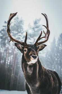 Patrick Monatsberger, King Of The Woods (Deutschland, Europa)