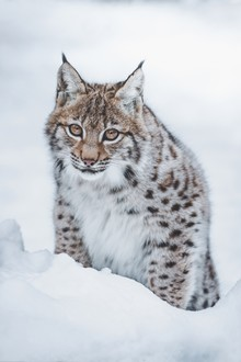 Patrick Monatsberger, Little Lynx (Germany, Europe)