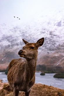 Martin Rau, Portrait in den Schottischen Highlands (Großbritannien, Europa)