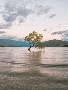Manuel Gros, Wanaka Tree II // New Zealand (New Zealand, Oceania)