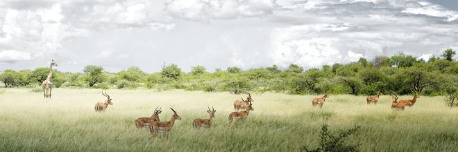 Norbert Gräf, Etosha Nationalpark, Namibia (Namibia, Afrika)