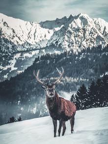 Daniel Weissenhorn, Hirsch mit Alpenkulisse (Deutschland, Europa)