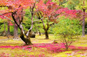 Victoria Knobloch, Herbst in Japan (Japan, Asien)