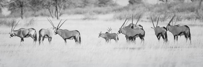 Dennis Wehrmann, Oryxherde (Namibia, Afrika)
