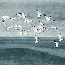 Katherine Blower, Gulls (, )