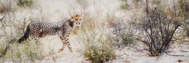 Dennis Wehrmann, Cheetah cub (Botswana, Africa)