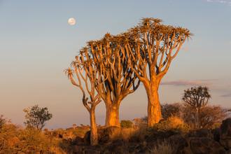 Dirk Steuerwald, Vollmond über Köcherbäumen (Namibia, Afrika)
