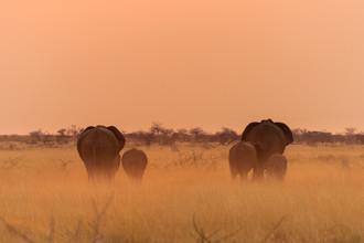 Dirk Steuerwald, Reisende Riesen (Namibia, Afrika)
