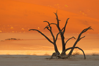 Dirk Steuerwald, Baumskulptur (Namibia, Afrika)