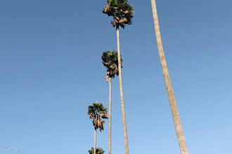 Ari Stippa, Everything is better with Palm Trees 2 (United States, North America)