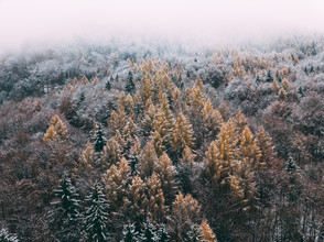 Sebastian 'zeppaio' Scheichl, Colourful trees (Austria, Europe)