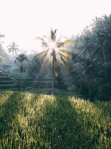Sebastian 'zeppaio' Scheichl, Sunrise in the rice fields (Indonesia, Asia)