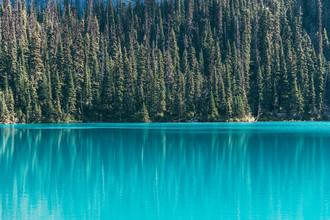 Sebastian 'zeppaio' Scheichl, Tree reflection (Canada, North America)