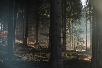 Nadja Jacke, Sunlight in Teutoburg Forest (Germany, Europe)