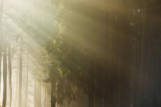 Lichtdusche im Wald - fotokunst von Nadja Jacke