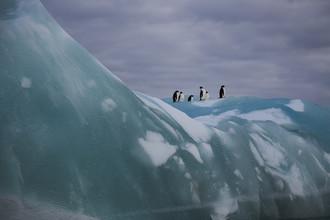 Jens Rosbach, Pinguine mit Eisberg (Antarktis, Europa)